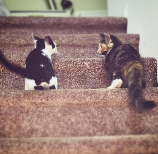 通りから救われたひとりぼっちの子猫とすべてを分かち合う親友が見つけた家
