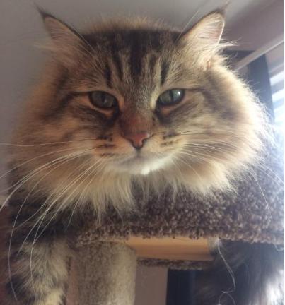 3年間私に興味を持たなかった猫が、ある日突然私の傍から離れなくなった・・・?