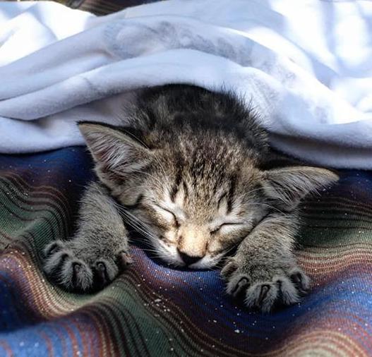 南の島が導いた運命の出会い。壁の中に隠れていたひとりぼっちの小さな子猫
