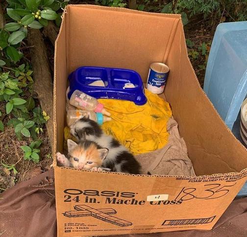 混雑した駐車場の隅にミルクと哺乳瓶と一緒に段ボール箱で捨てられていた6匹の子猫