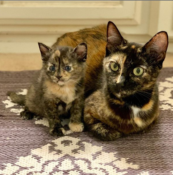 茂みの外で4匹の子猫を出産した直後に救出された野良猫の家族
