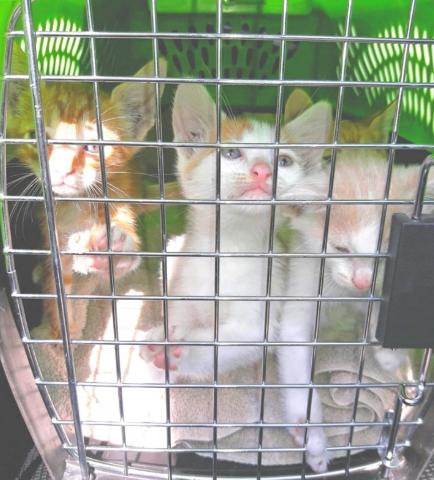 ゴミ袋に入れられ捨てられていた4匹の子猫と近くのシェルターに保護されていた母猫たちの再会