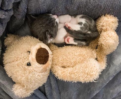 生後間もなくひとりぼっちで見つかった子猫に寄り添う3匹のわんこ