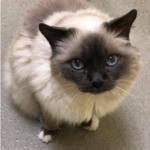 老人ホームに入る飼い主さんが16歳の2匹の愛猫のために残したメモ