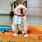 嵐を逃れて辿り着いたビルで弁護士として正式に雇用された子猫