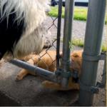 わんこが散歩にでかけるのをじっと待つ彼女が大好きなお隣さんの猫