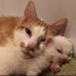 我が子を必死で守ろうとしていた若い母猫が安全を確信したら・・・
