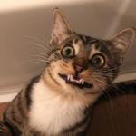 13秒の動画が世界中に拡散! ファンを増やし続けている元気いっぱいの子猫