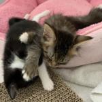 少年に救助されたひとりぼっちの子猫に寄り添って元気にしてくれた猫たち