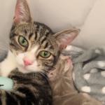 厳しい外の暮らしで子育てに苦労していた母猫が孤児の子猫を見つけたら・・・