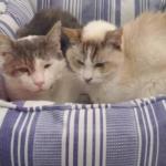 療養中の孤独に生きる希望を失っていた猫を救ったシニア猫