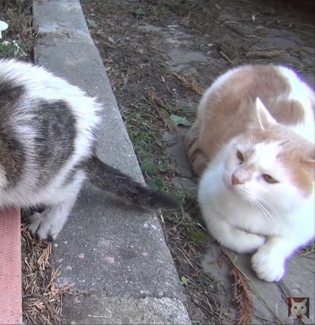 助けが必要な猫たちが次々に現れた2年前。新しい人生を歩んでいる猫たち