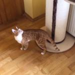 賢い猫の身体能力を活かしたキャットツリー活用法