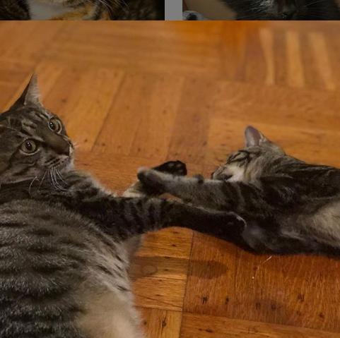 ずっと鳴き続けていた猫を救ったひとりぼっちの子猫