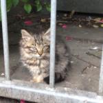 散歩の途中、飼い猫が茂みの中に見つけた小さな子猫