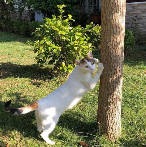 庭の猫も気になっていた・・・5匹の子猫と母猫の新しい暮らし