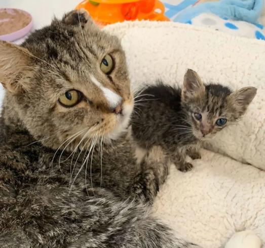 次々に現れる通りから救われた子猫達にぬくもりと希望を与えるシニア猫