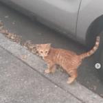 出会った翌日家の外で私を探していた人懐っこい野良猫