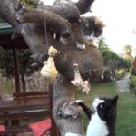 木の上のごちそうにそれぞれの反応を見せる猫たち