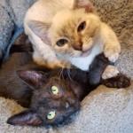 親友と重ね合う手。お互いに瀕死の状態で救助された2匹の猫
