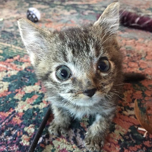 コロニーから救助された4匹の子猫。リスのような最も小さな子猫の3か月後
