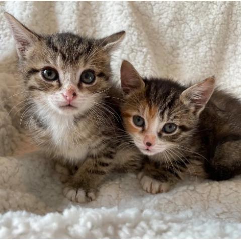 コミュニティサイトで引き取り手を探していた小さな子猫の姉弟