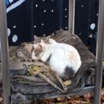 小学校の校庭の一角で高校生が見つけた3匹の子猫を守っていた母猫